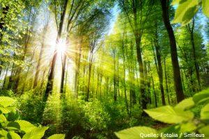 Holz-ETFs als alternative Anlage