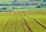 Investieren in Agrarrohstoffe