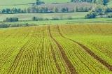 Agrarrohstoffe
