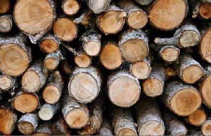 Holzwirtschaft: Nachhaltigkeit sorgt für dauerhafte Erträge