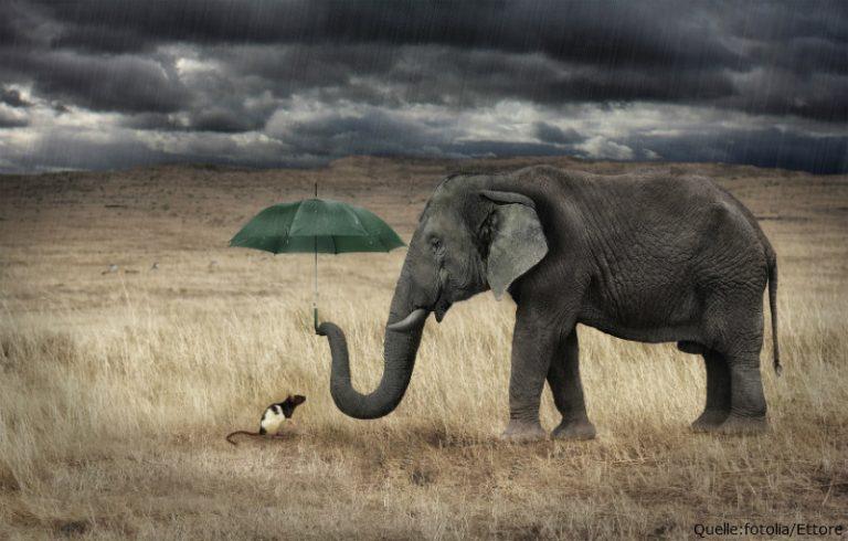 Von ETF-Elefanten und ETF-Mäuschen