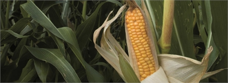 Deutsche Bank setzt weiterhin auf Finanzprodukte mit Agrarrohstoffen