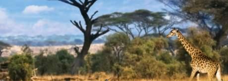 afrikaetf
