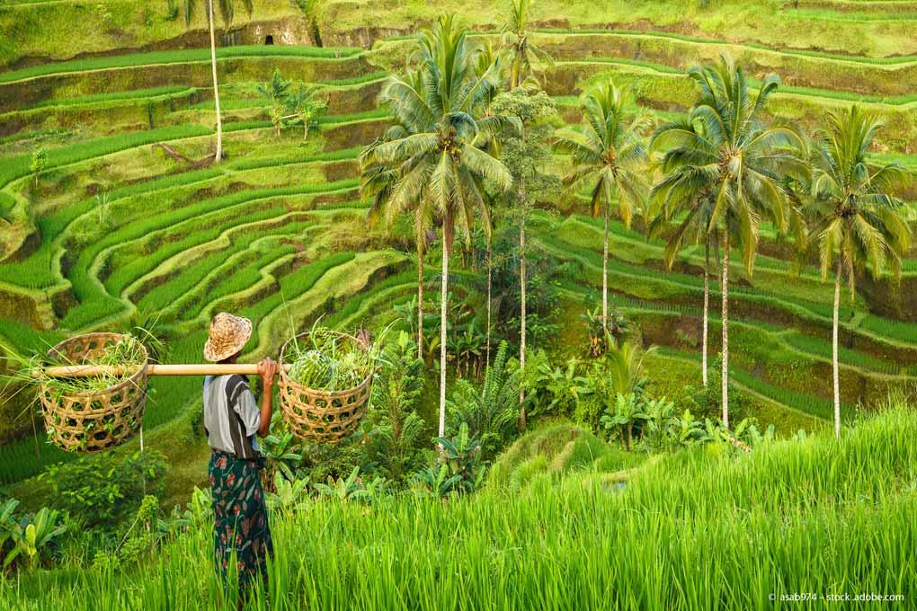 In Sachen Wachstum hängt der weltgrößte Inselstaat in Südostasien andere rohstoffreiche Länder ab. Nun muss sich das gesunde Umfeld nur noch in den Aktienkursen niederschlagen.