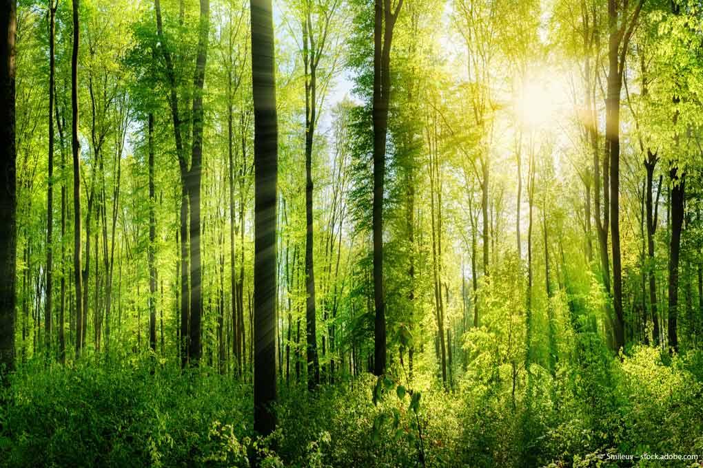 Wald-ESG