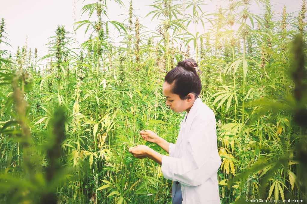 Cannabis-Index