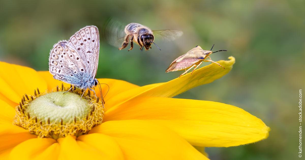Ossiam mit Biodiversity-Food-ETF.